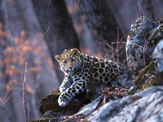 ББС живая природа Национальный парк Серенгети (2011)